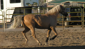 Utah Equestrian Developments